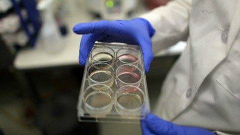 Fetal Tissue Research to Be Investigated