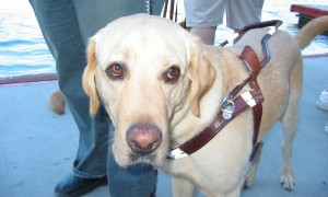 guide-dogs-1485725-1281