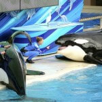 SeaWorld to Abandon Orca Exhibits