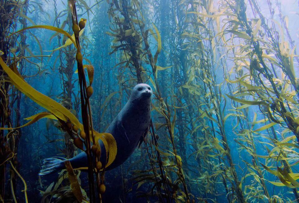 Curious Harbor Seal