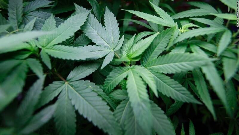 California, 7 Other States to Vote on Legalization of Marijuana