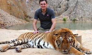 Tigertemple