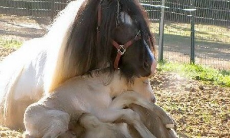 Mama horse with baby on lap up close