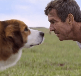"""""""A Dog's Purpose"""" Premiere Cancelled Amidst Animal Abuse Controversy"""