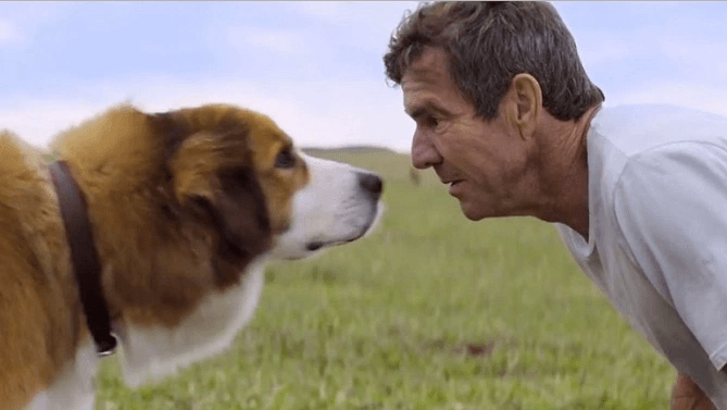 """A Dog's Purpose"" Premiere Cancelled Amidst Animal Abuse Controversy"