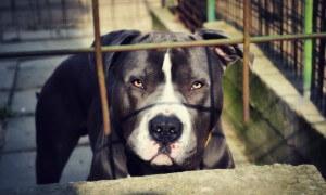 animal-705991_960_720