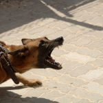Swedish Women Mauled by Dogs File $500,000 Lawsuit
