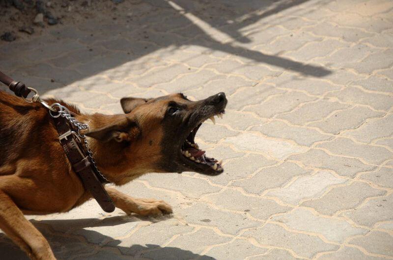 Swedish Women Mauled by Dogs File $500,000 Lawsuit