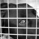 Dog and Cat Meat Banned for Consumption in Taiwan
