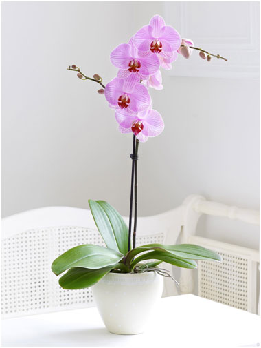 12 Flowering Plants to Improve Your Health and Brighten Your Space