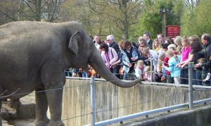 Do Elephants Qualify for 'Personhood?'