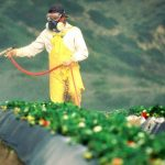 Does Monsanto's Roundup Weed Killer Cause Cancer?