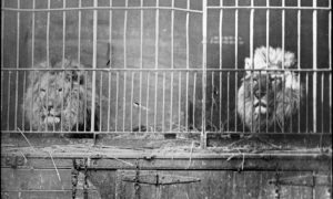 caged animals