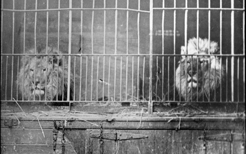 caged animals