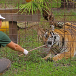 Federal Judge Gives Control of Joe Exotic's Zoo to Carole Baskin